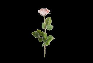 Mākslīgā Roze